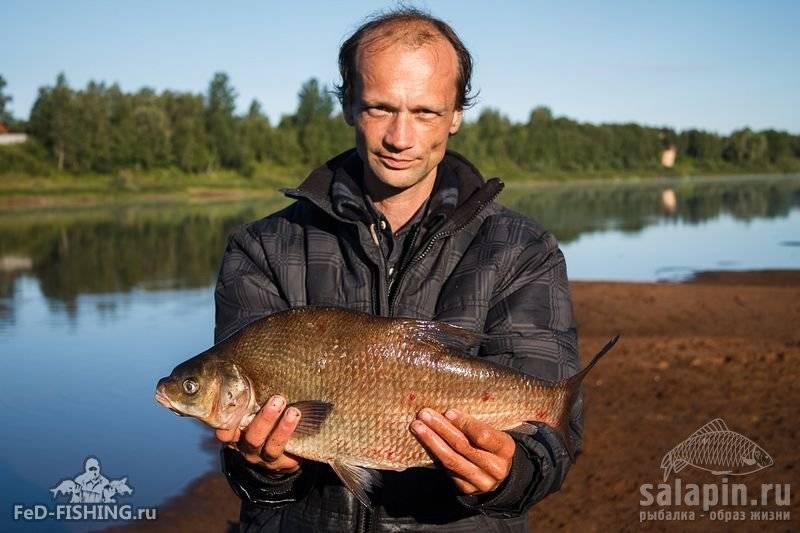 Озеро ильмень, новгородская область. на карте, отдых, базы отдыха, реки озера, рыбалка, глубина, погода, отели, как добраться — туристер.ру
