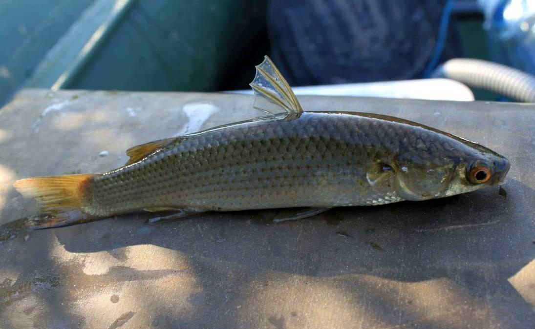 Отдых и рыбалка в ейске – лучшие места и особенности ловли