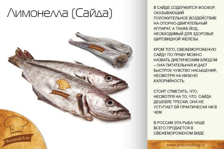 Рыба путассу: польза и вред