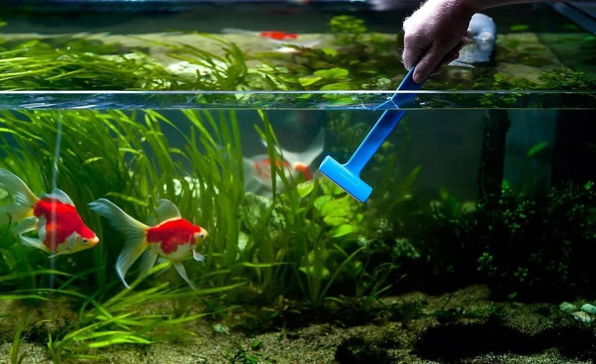 Как очистить аквариум: советы и рекомендации как правильно чистить аквариум (85 фото)