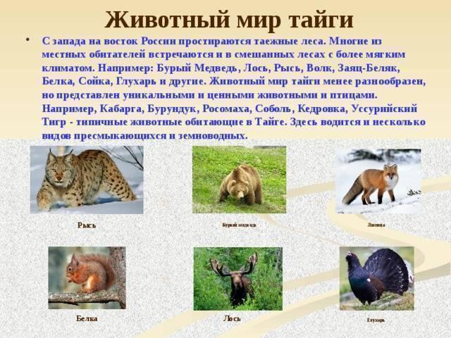 Животные и птицы в тайге россии: список, характеристика, описание, фото