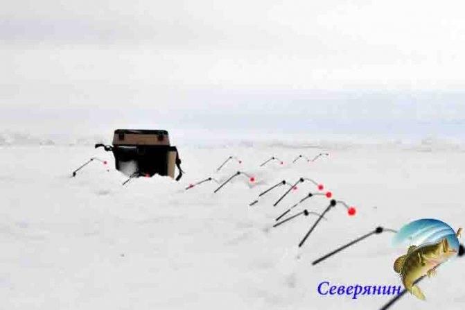 Ловля корюшки зимой: выбираем снасти и удочку