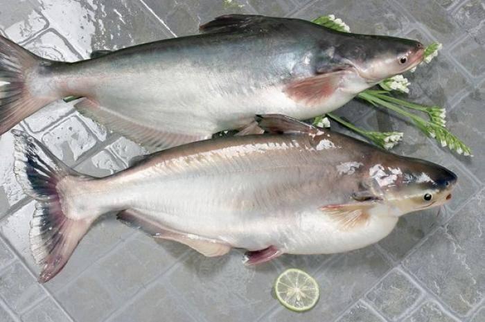 К какому классу относятся рыбы: особенности строения и жизненного цикла