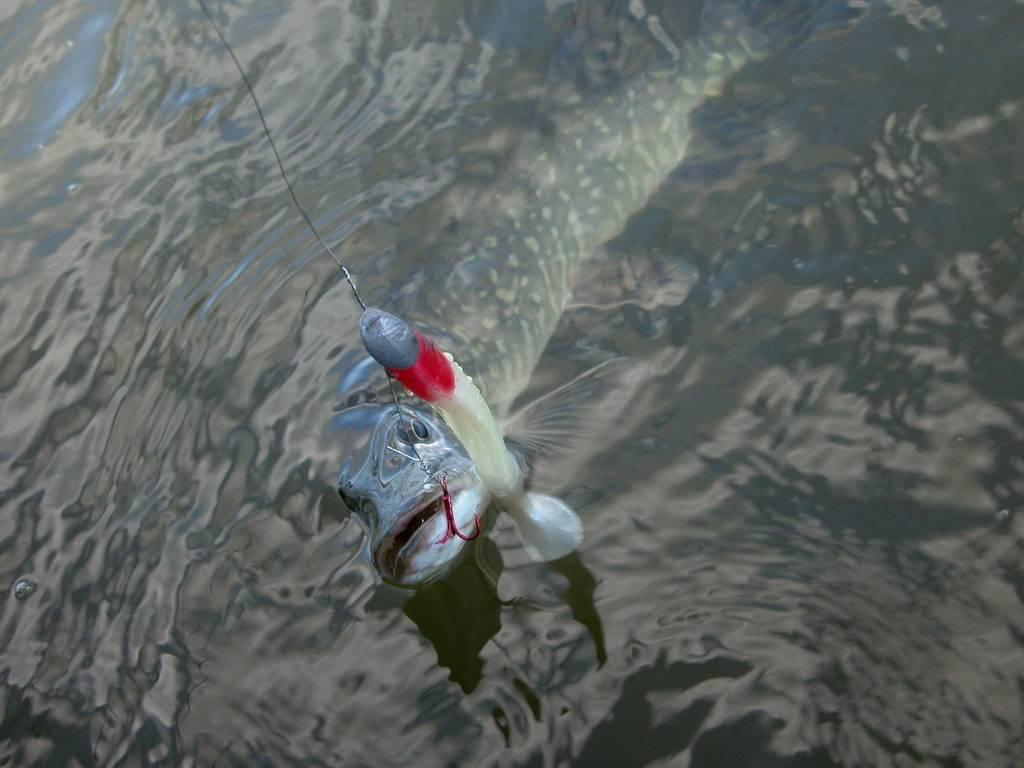 Рыбалка в ленинградской области: лучшие места на карте топ-10