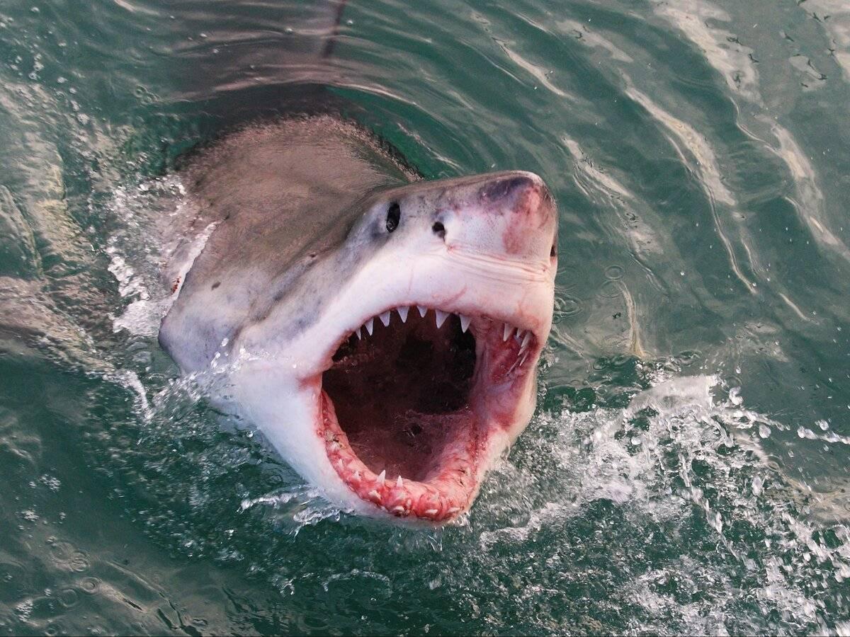 Акулы черного моря - «как и почему»