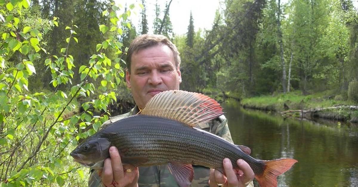 Ловля карася: как ловить, если он не клюет, техника рыбалки на удочку