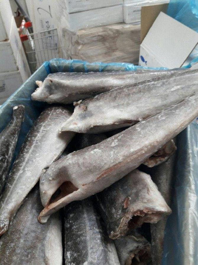 Сайда: что за рыба, где водится, полезные свойства