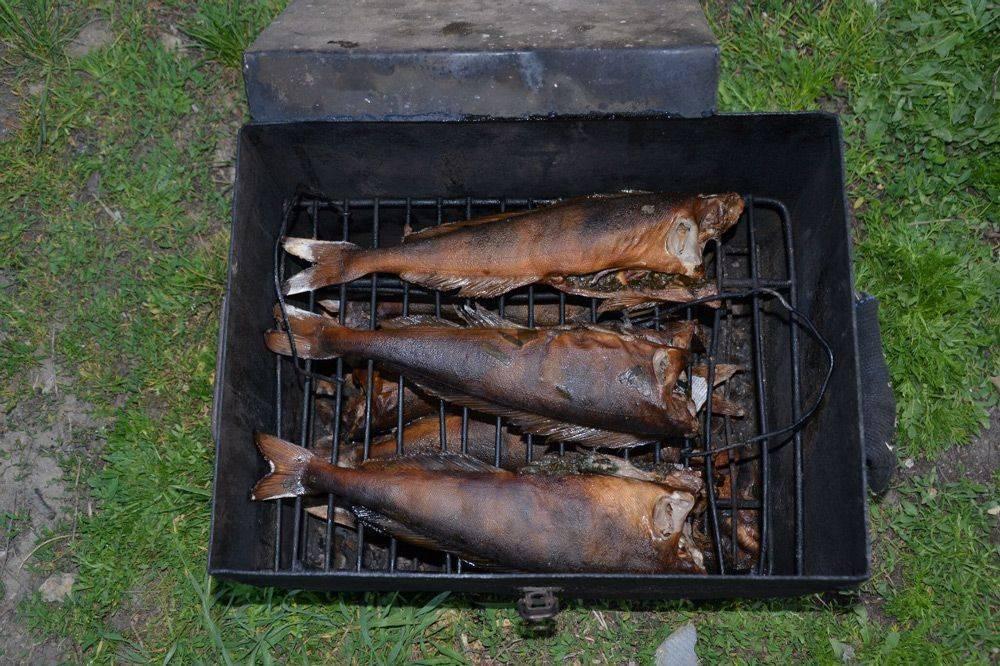 Какую рыбу лучше коптить в коптильне (горячего или холодного копчения)