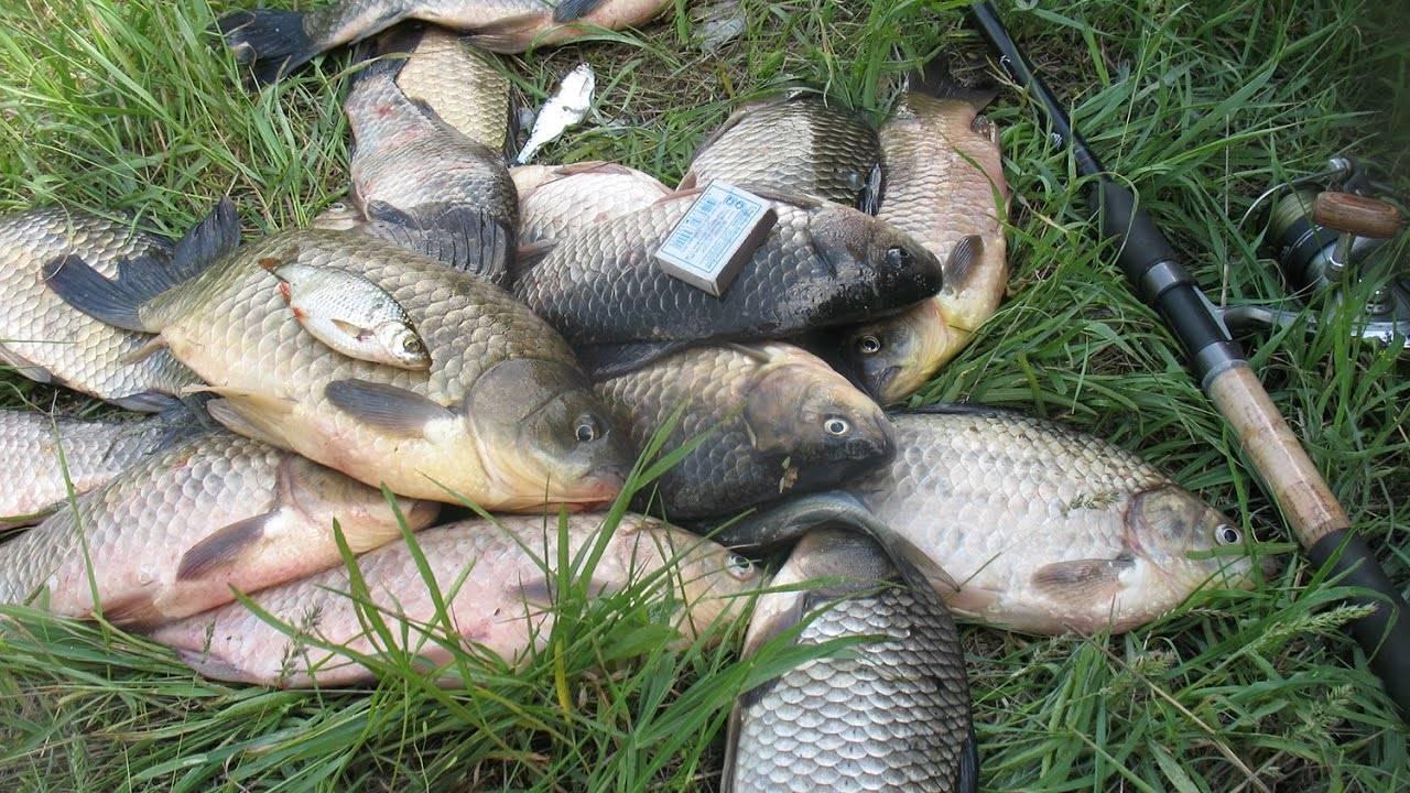 Рыбалка осенью, ловля в сентябре