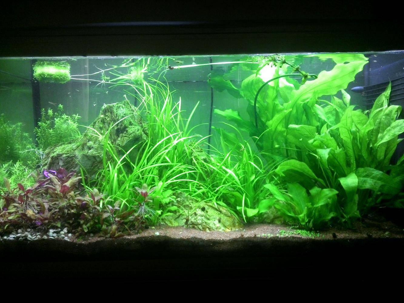 Освещение аквариума светодиодными прожекторами: как подобрать, рассчитать, закрепить и сделать самому светильник для аквариума и травника