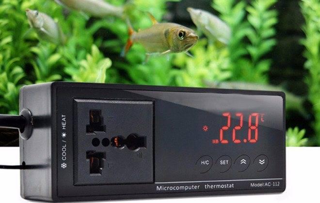 Оптимальная температура воды в аквариуме для рыбок