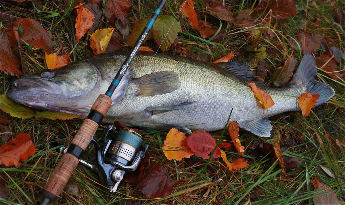 Рыбалка на амуре: разновидности снасти для ловли на реке, как правильно подобрать оснастку для зимней ловли рыбы