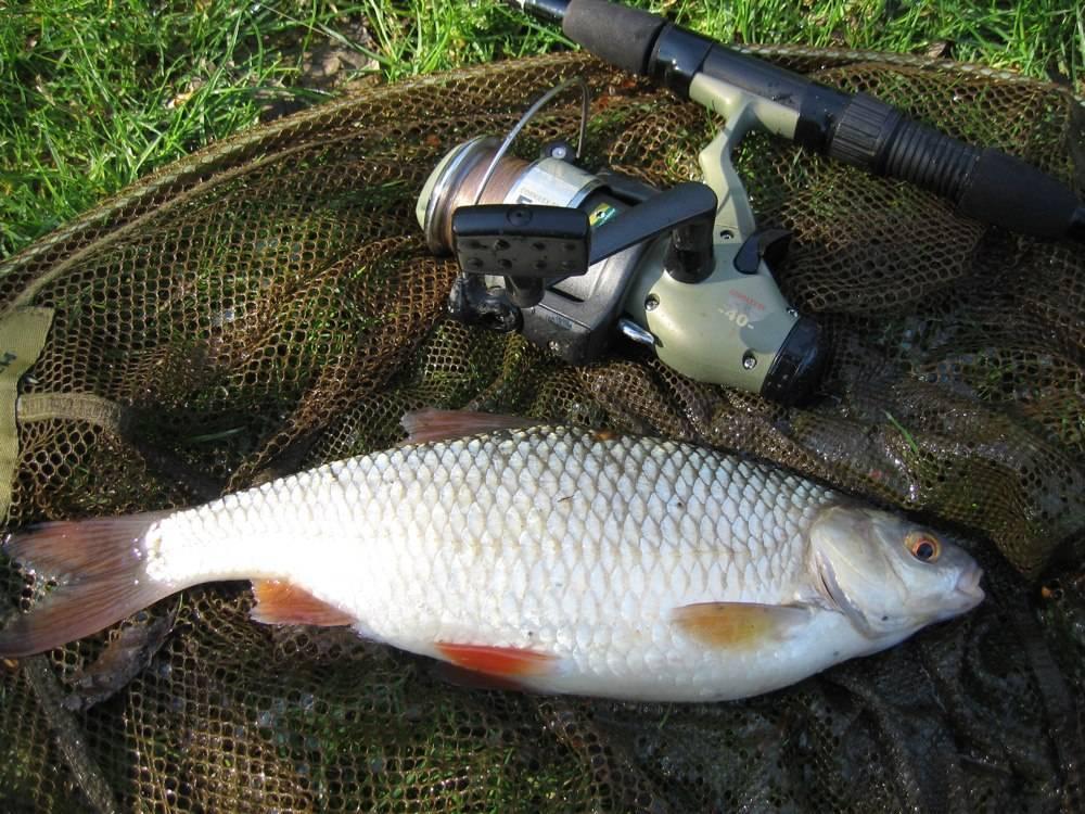 Рыбалка в муроме и районе: популярные места вылова рыбы на оке, платные водоёмы