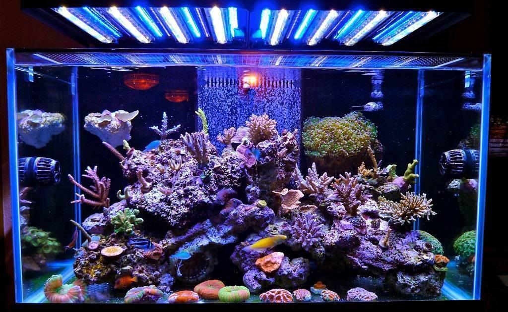 Запуск аквариума для начинающих и продвинутых!