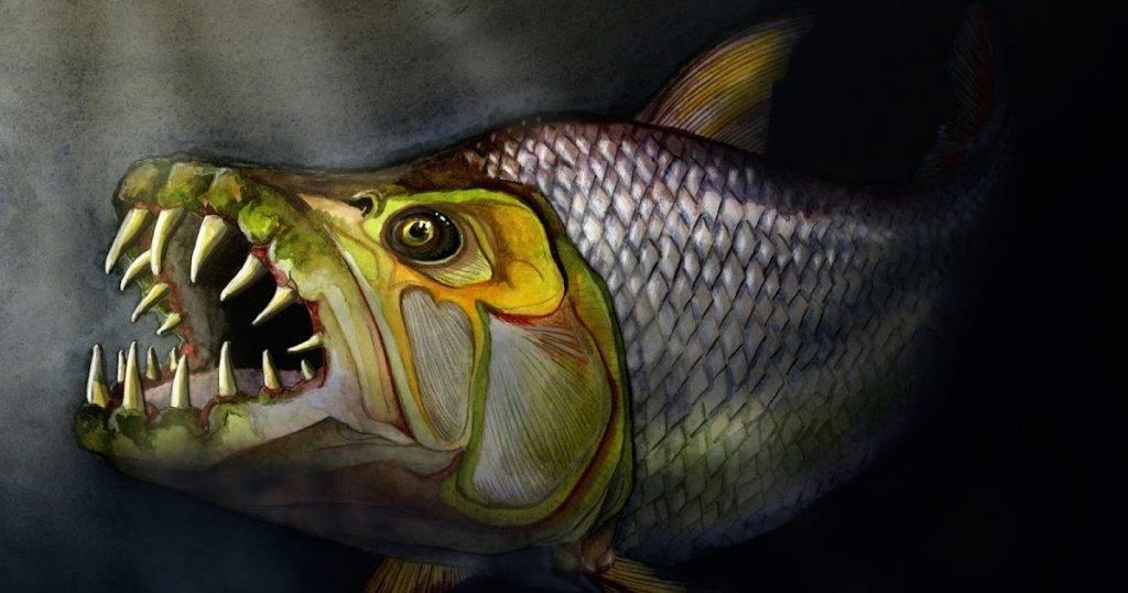 Рыба гольян: места обитания и техника ловли