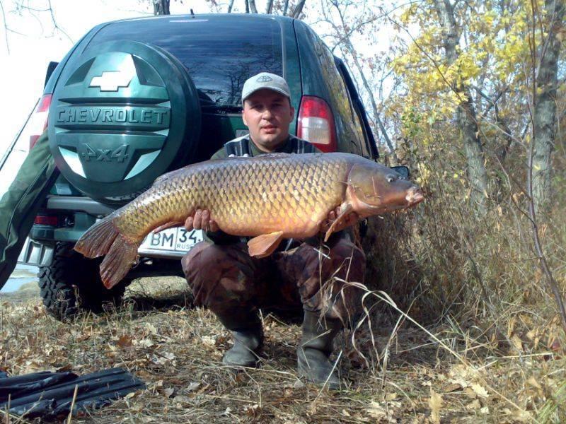 Рыбалка на реке волга: как и на что ловить, лучшие места