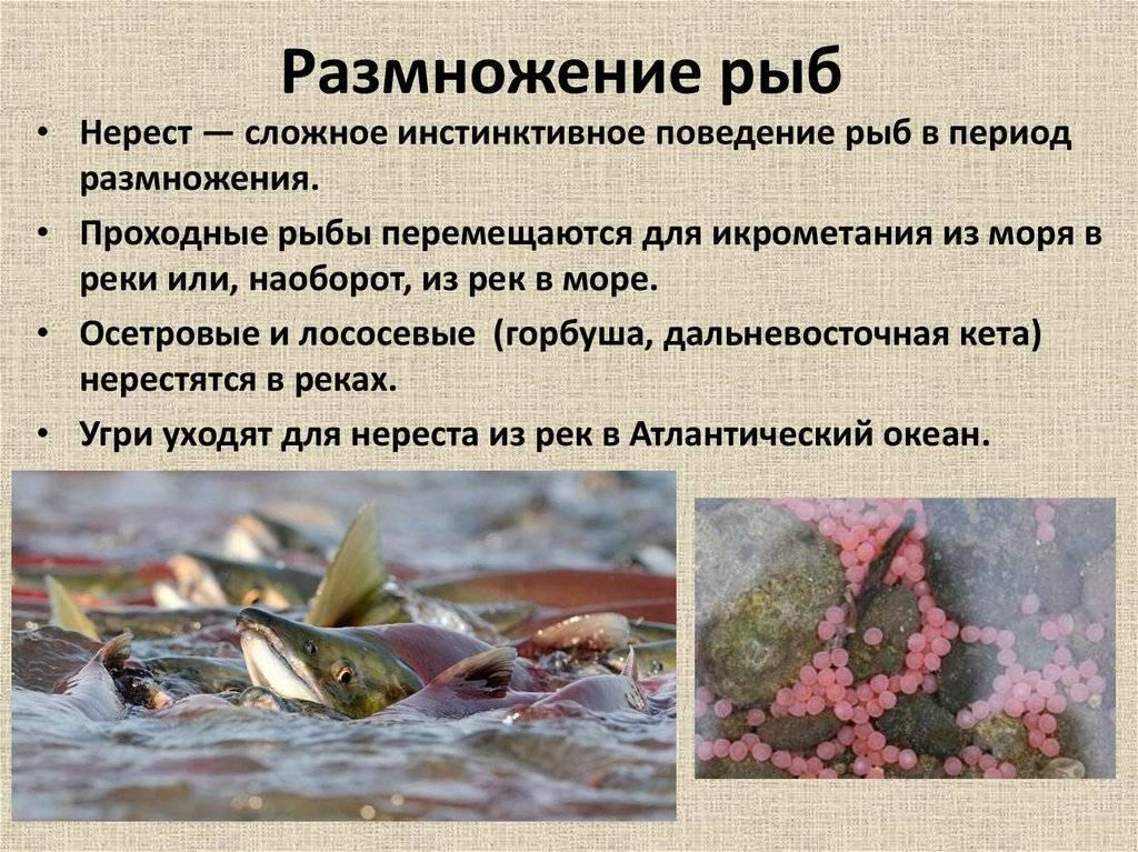 Стимуляция нереста аквариумных рыб - основные рецепты | аквариумные рыбки