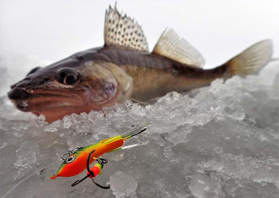 Ловля судака зимой набалансир