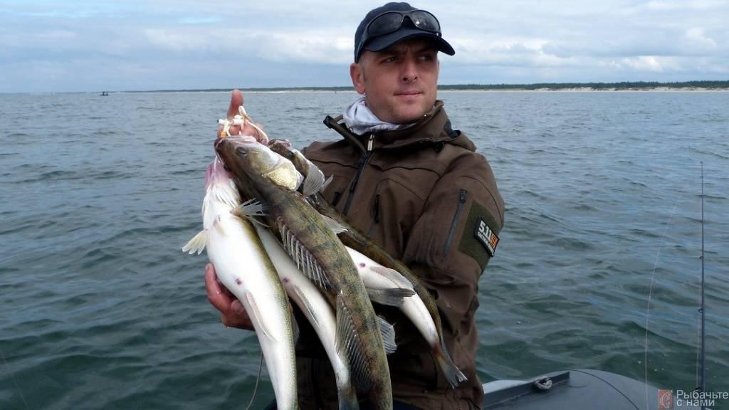 Трудно представить - какую рыбу раньше в азовском море ловили (фото)