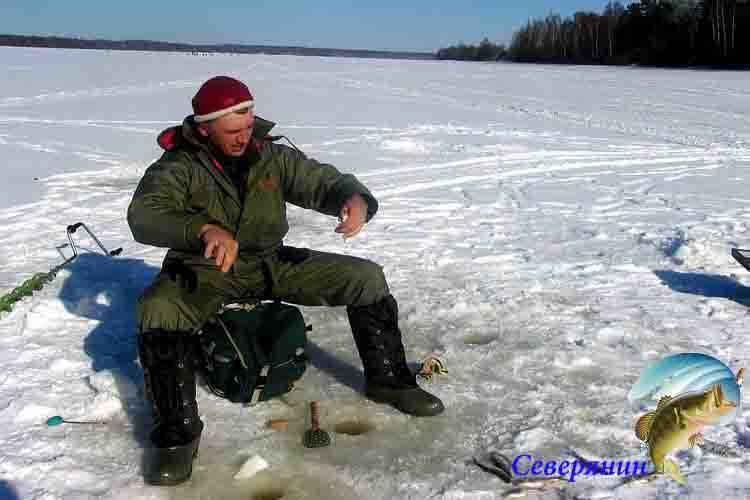 Какая рыба водится в енисее, особенности ловли в разных районах реки