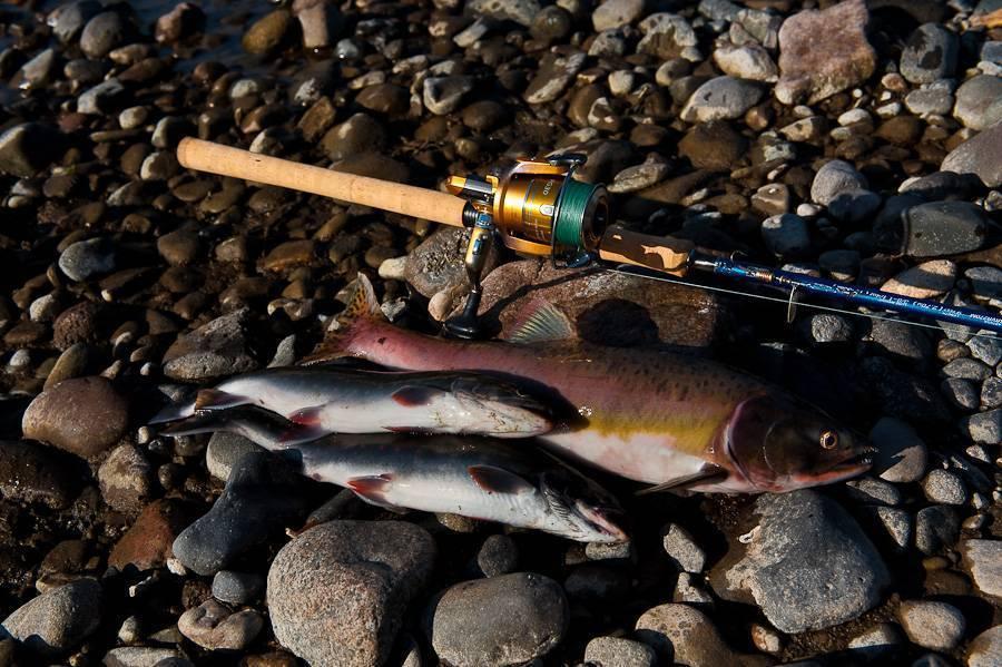 Видовой состав рыб в волге