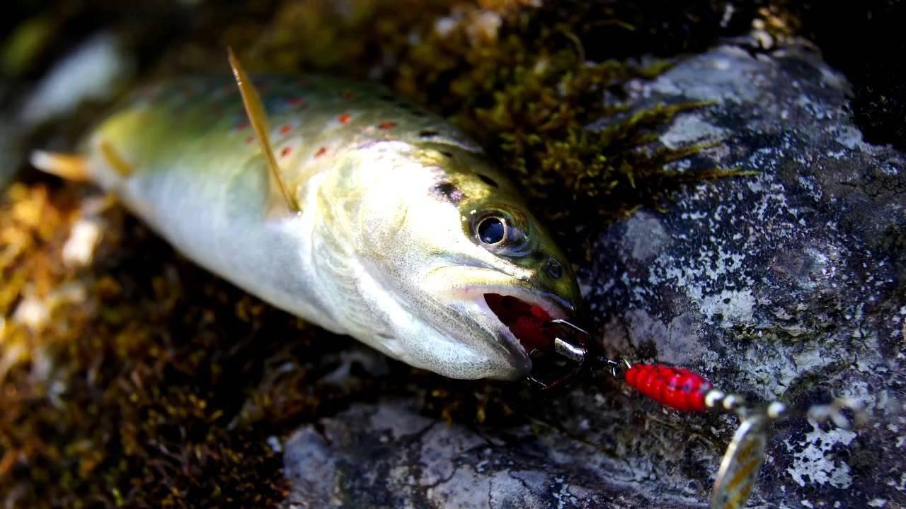 Ловля ленка на спиннинг – рыбалке.нет