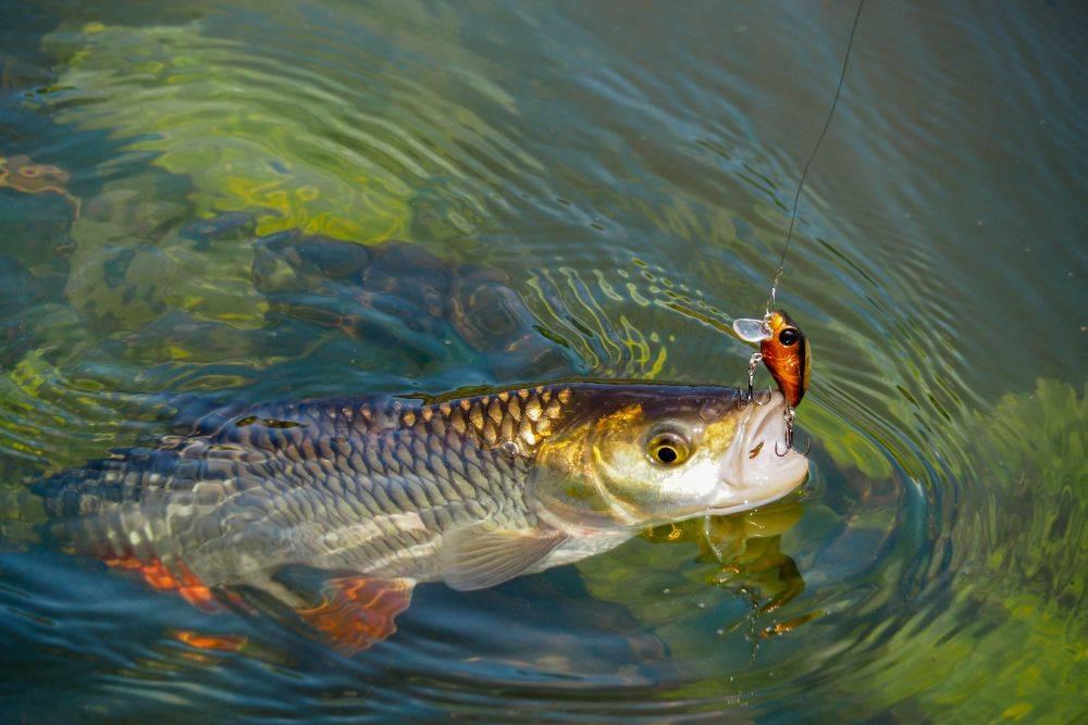 Рыбалка на белоярском водохранилище