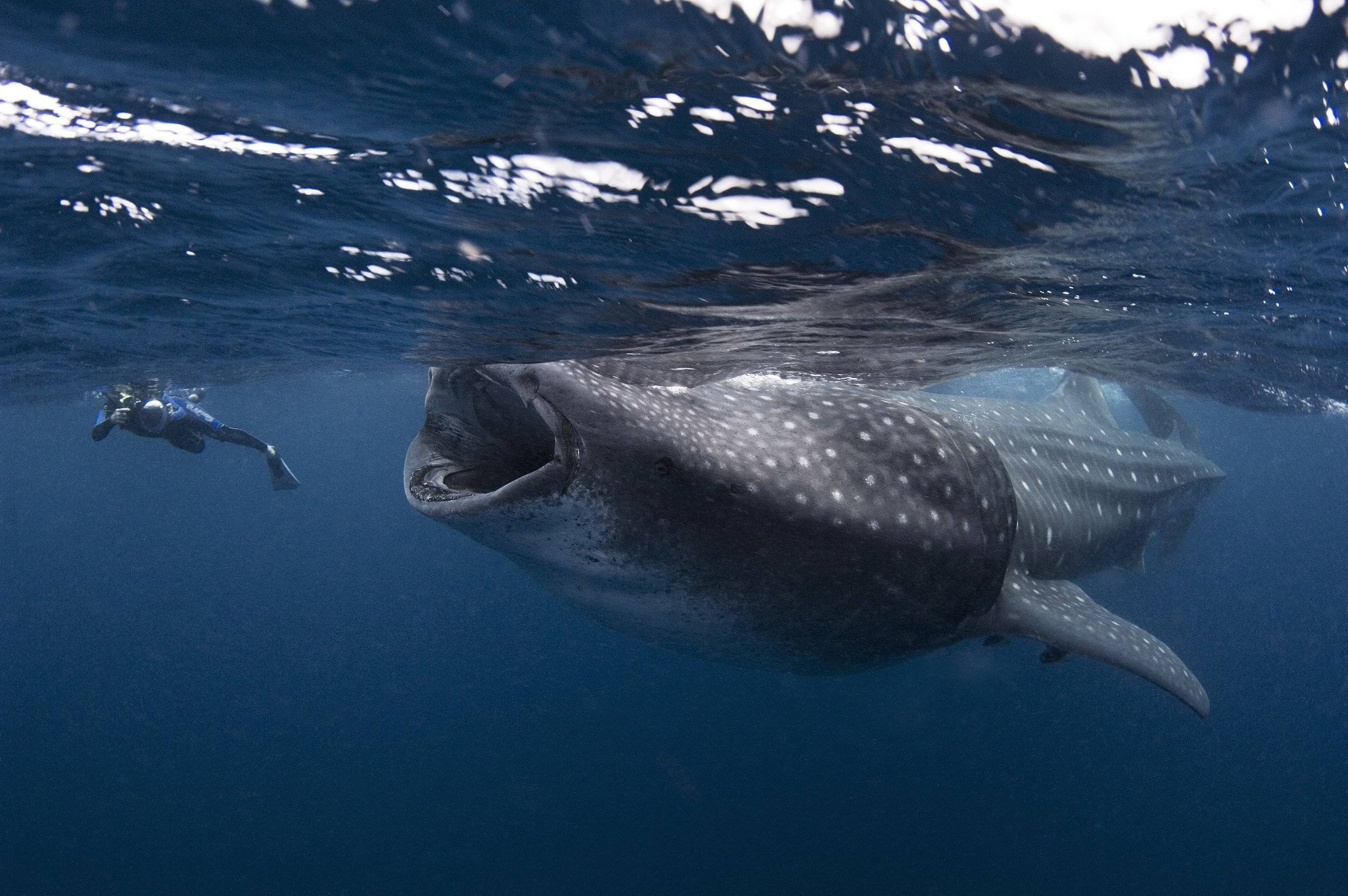 Где находится самый большой океанариум в мире