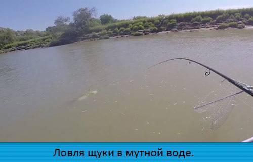 Ловля щуки весной на спиннинг: с берега, с лодки, на малых реках, на озере