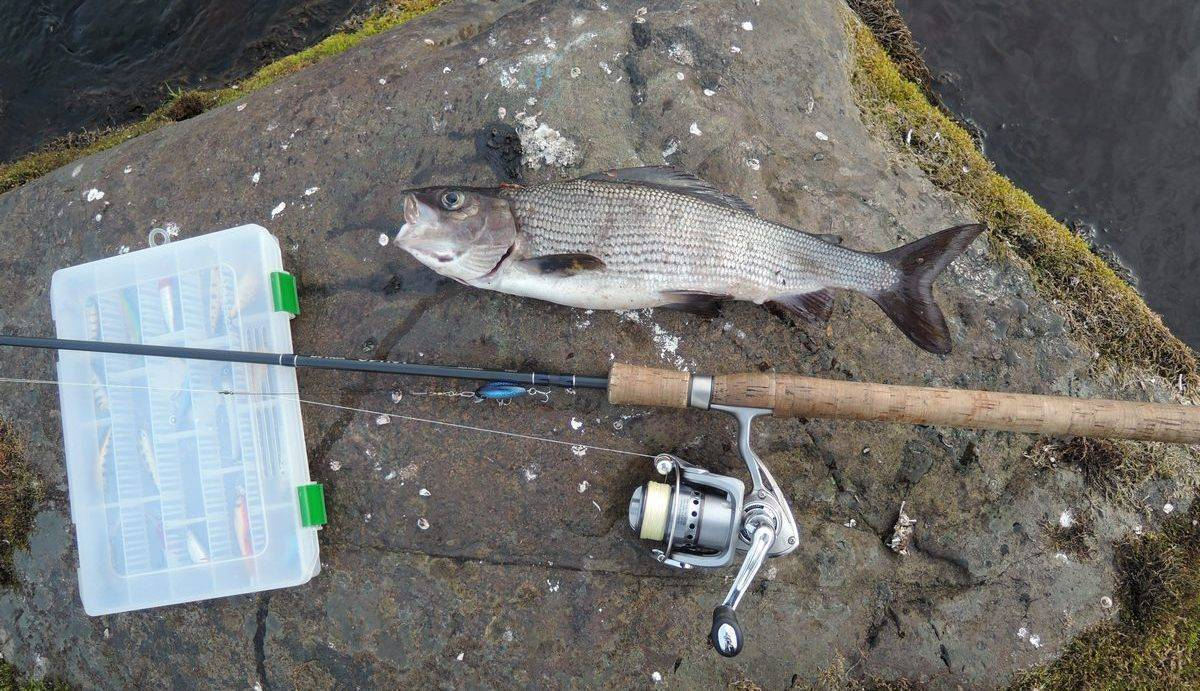 Особенности и нюансы ловли хариуса весной – рыбалке.нет