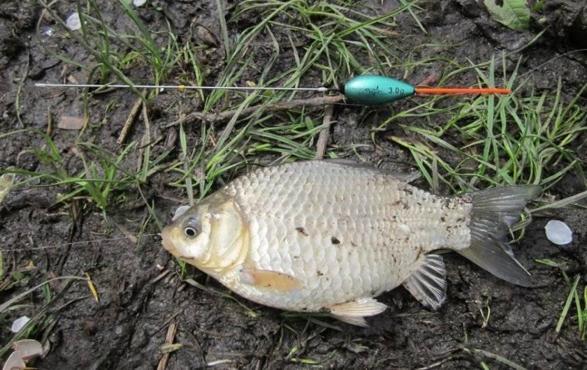 Рыбалка на карпа летом