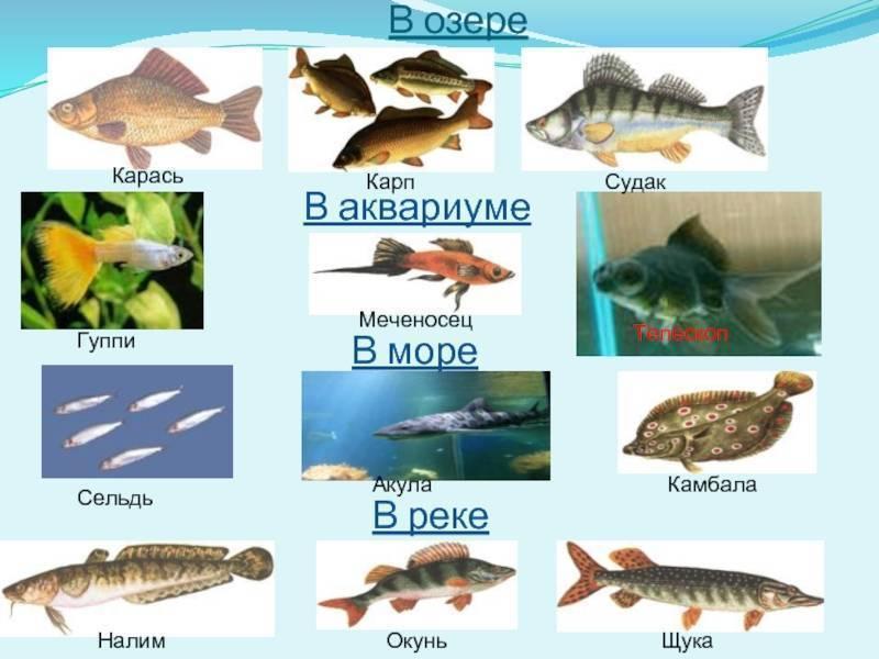 Все о ловле рыбы в июле: применяемые снасти и активность клёва разных рыб