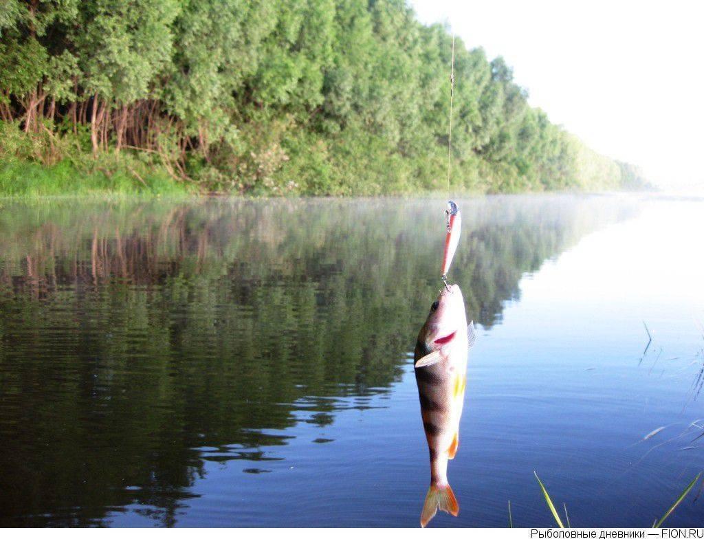 Рыбалка на оке в серпуховском районе московской области, особенности ловли сома