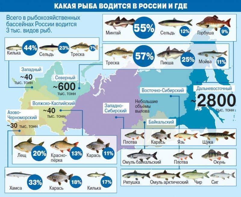 Рыбалка в республике коми. отчеты с водоемов. обсуждение