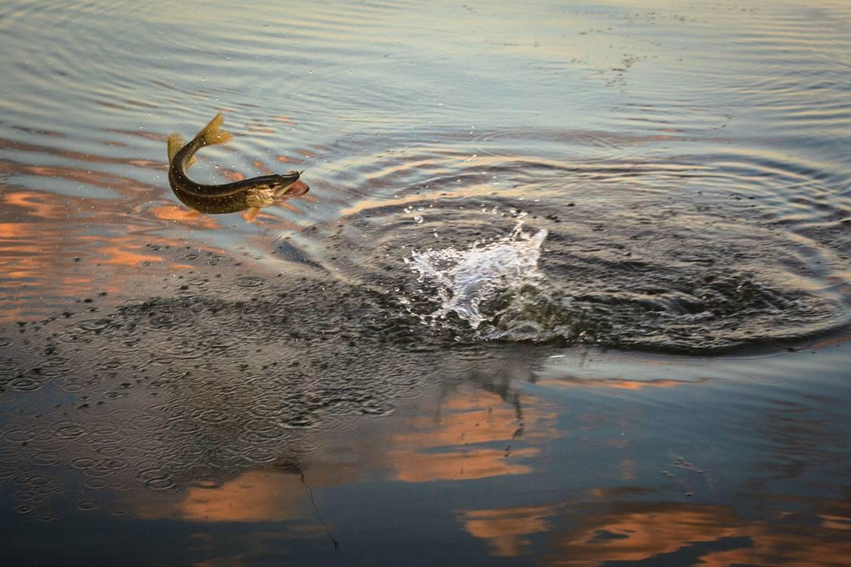 Прогноз клева рыбы на пять дней » календарь рыболова » мир улова