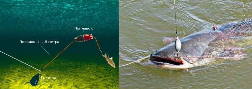 Секреты рыбалки на сома: особенности ловли и выбор снастей