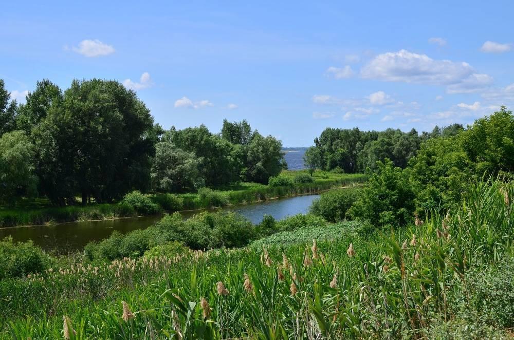 Река ловать » отдых на природе. места, статьи, события.