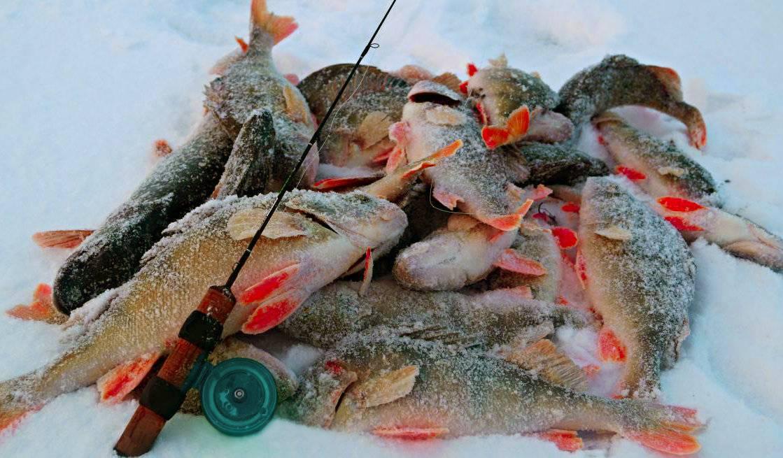 Как ловить щуку зимой— тактика поиска снасти и зимние приманки на щуку — рыбалка отдых для души