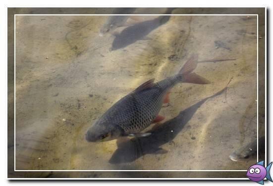 Подробная полная характеристика знака зодиака рыбы.