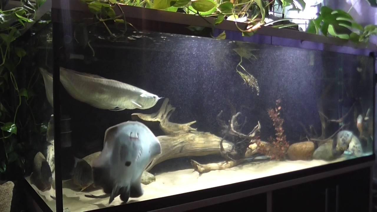 Электрический скат – морская рыба, описание, характеристики