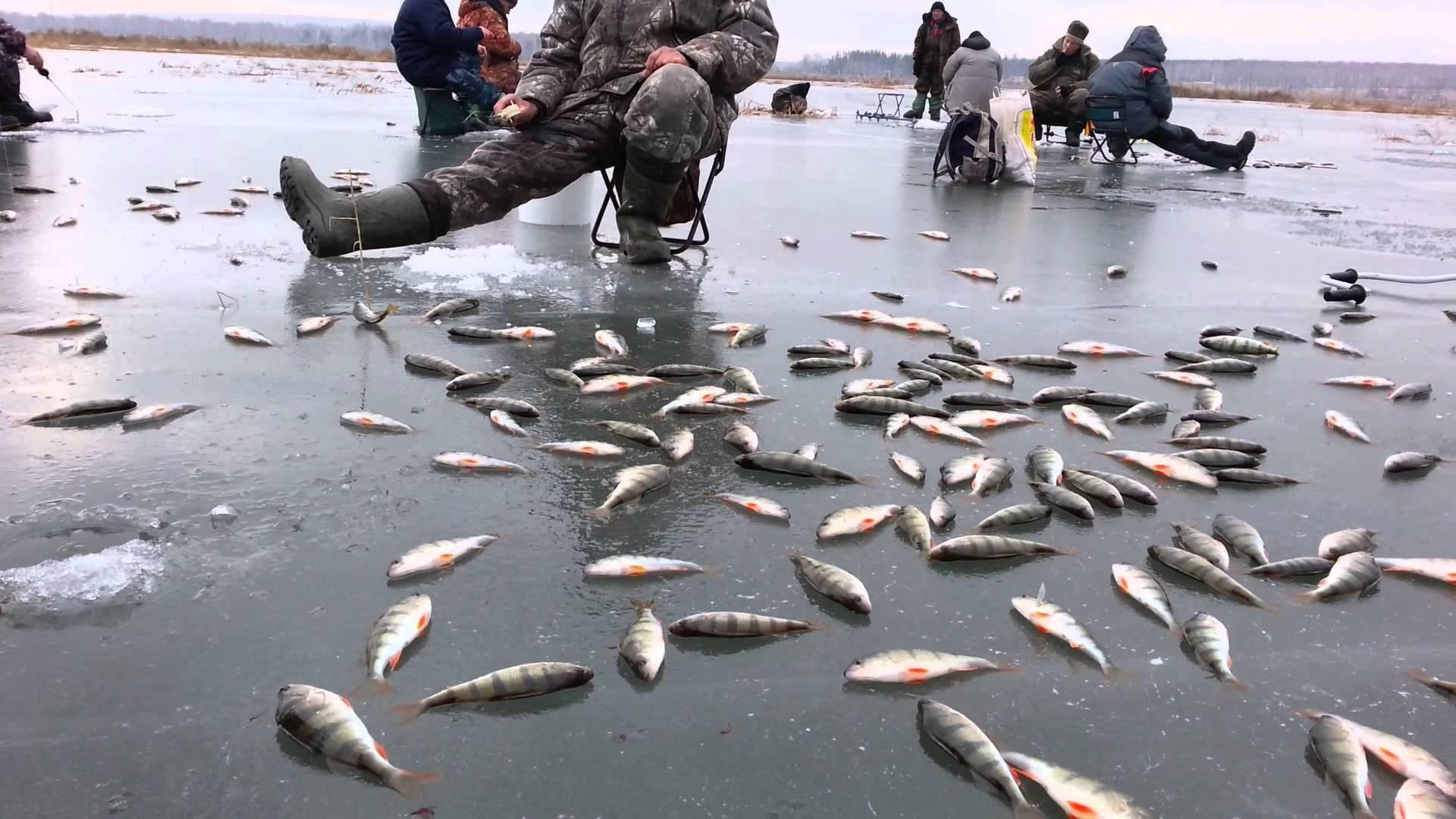 Рыбалка в витебской области: лучшие места