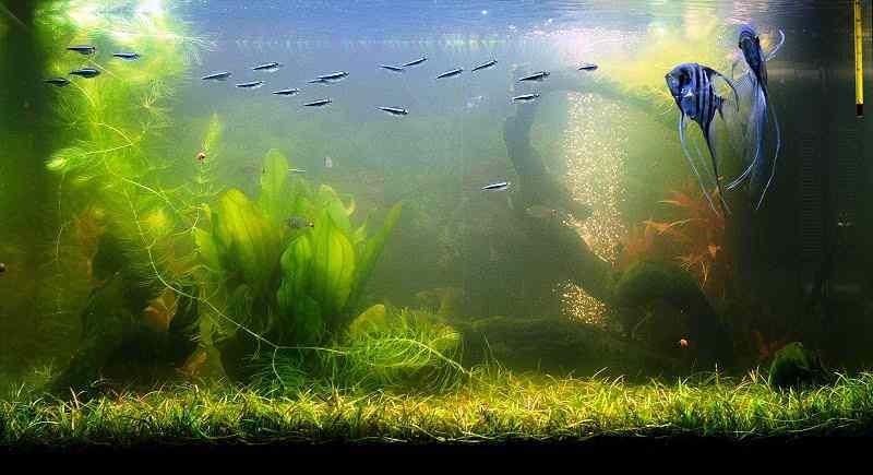 Мутная вода в аквариуме: почему помутнела и что делать