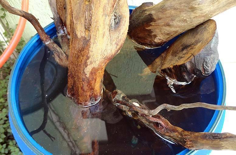 Как подготовить и выбрать корягу для аквариума?