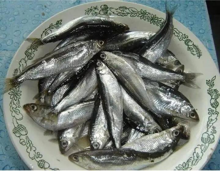 Шпроты-тугуны в масле – кулинарный рецепт