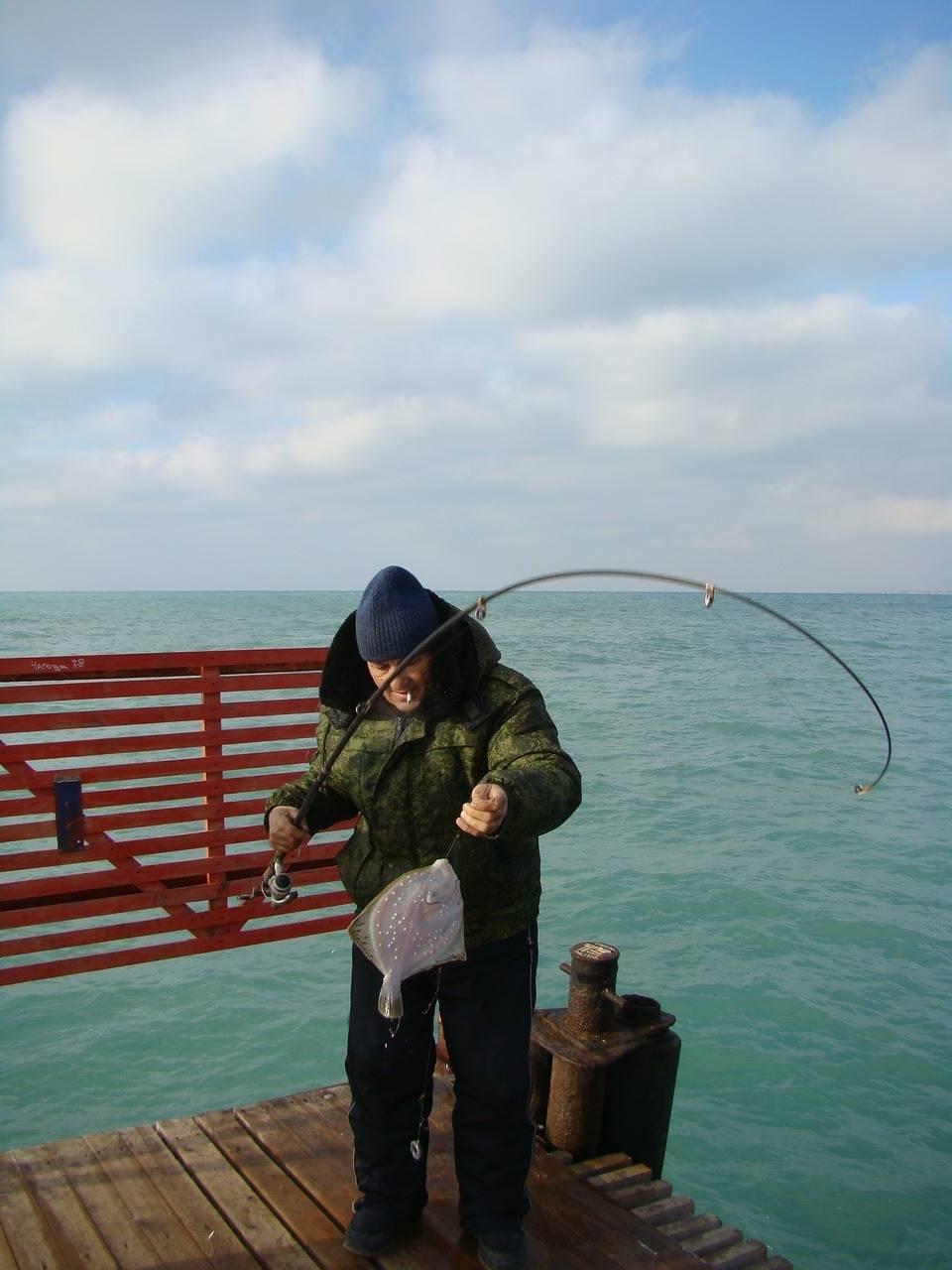 Ловля ставридки в черном море — методика и особенности поимки