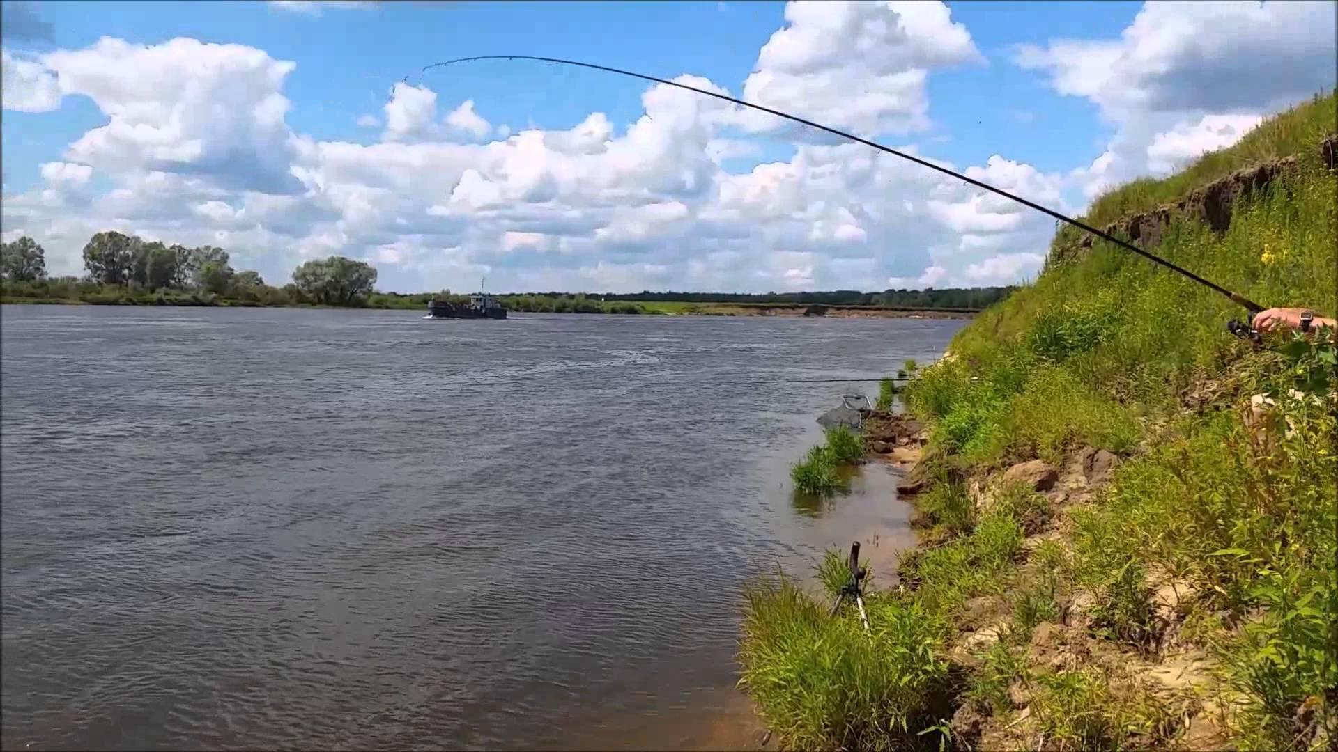 Рыбалка на оке: какая рыба водится, рыбные места, на что лучше клюет