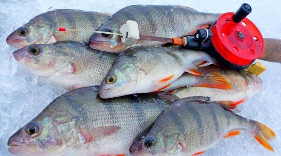 Рыбалка на нижней волге 5-8 мая 2004г. (о.я.соболев)