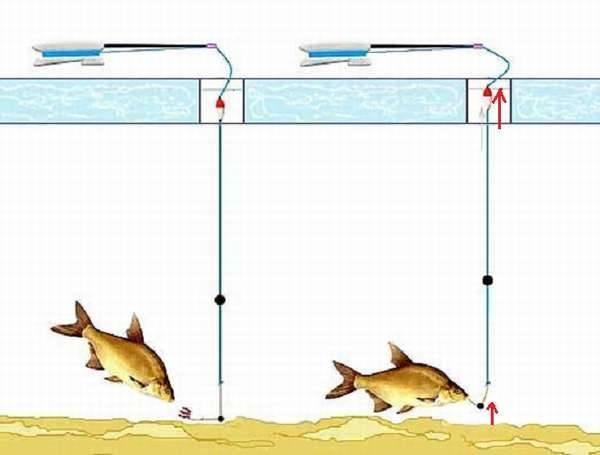 Как оснастить зимнюю удочку: правильный монтаж поплавочной снасти на плотву