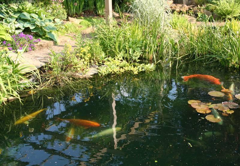 Разведение рыбы - с чего начать и как правильно содержать рыбу (95 фото)