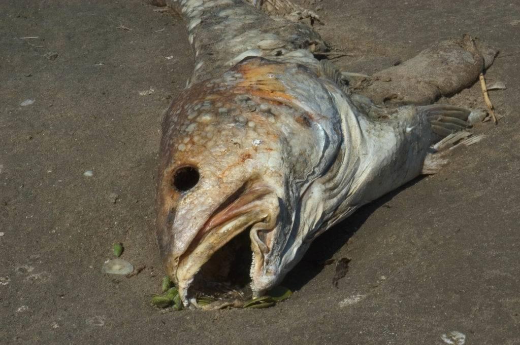 К чему снится рыбья голова: 4+ детальных трактовок сна - сонник рыбьи головы